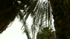 Oasis in Dunes with Palms - stock footage
