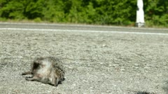 Victim in a Road Accident Stock Footage