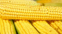 Stock Video Footage of DOLLY: Corn On The Cob