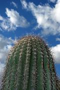 Saguaro Cactus Thorns Stock Photos