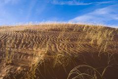 Wispy Grass Sand Dune Landscape Stock Photos