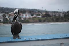 On the wharf Stock Photos
