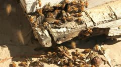 A bee hive with bees coming and going. Stock Footage