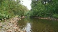 Forest Creek Landscape 01 Stock Footage