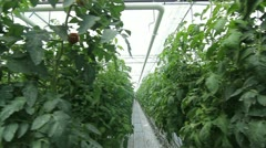 Plants in the greenhouse Stock Footage