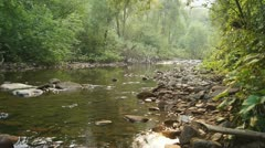 Forest Creek Landscape 03 Stock Footage