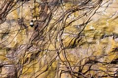 Lamp and vine on old artificial stone wall Stock Photos