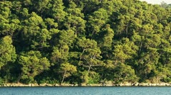 Island Mljet forest Stock Footage