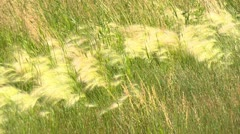 Agriculture, wheat fields and ditch breezy CU Stock Footage
