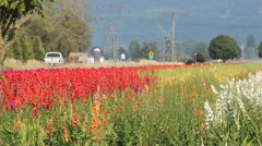 Flower Farm Along Rural Country Road - stock footage