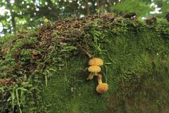 temperate rainforest mushroom - stock photo