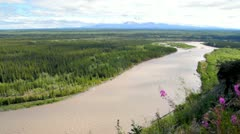 Copper River with fireweed Stock Footage