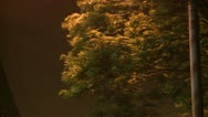 Stock Video Footage of Trees Thrash In Violent Hurricane Winds