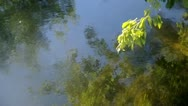 Moving water plants Stock Footage