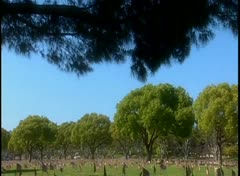 Tilt down to hundreds of graves in a military cemetery. Stock Footage