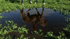 Rider on a horse reflected in the water Stock Footage