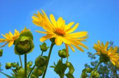 Beautiful Yellow Wild Flowers - stock photo