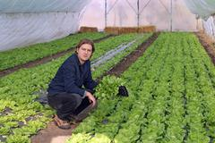 Greenhouse Vegetable Grower Stock Photos