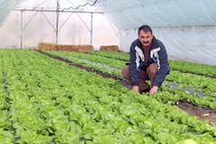 Farmer in Greenhouse - stock photo