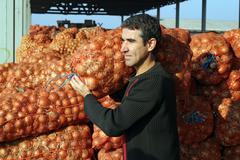 Farmer With Onion Harvest Stock Photos