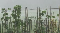 Kitchen garden in Heavy Rain Stock Footage