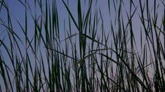 Long Grass Moving In The Wind - stock footage
