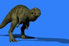 T-Rex walks into scene .mp4 Stock Footage