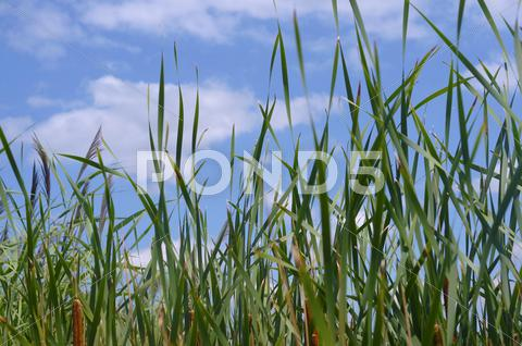Stock photo of Beautiful Long Summer Grass