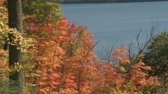 Autumn colorful foliage Stock Footage