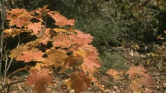 Stock Video Footage of Fall colors
