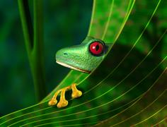 Stock Illustration of endangered rainforest tree frog