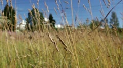 Through the grass. Stock Footage