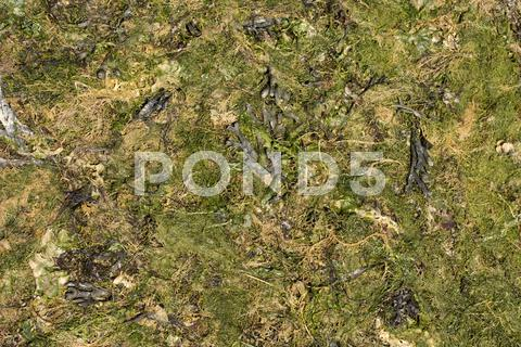 Stock photo of surface covered with green seaweed