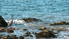 Heron on a rock in the sea - stock footage
