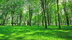 Park with green lawn. - stock footage