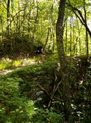Lone Hiker follows Appalachian Trail.JPG Stock Photos
