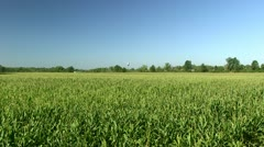 Giant Corn Field - Wide Shot - stock footage