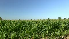 Water Tower & Corn - Extreme Zoom Stock Footage