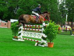 Horse jumping over obstacle Stock Photos