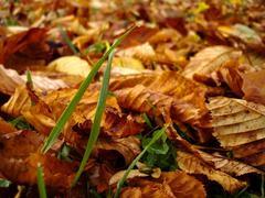 autumn macro scene - stock photo