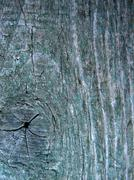 wood texture 1 - stock photo