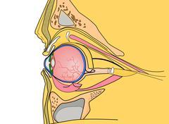 Medical illustration of the human eye Stock Illustration