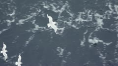 Several gulls flap and fly under water surface Stock Footage