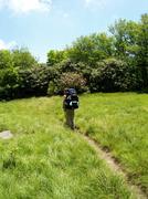 Lone Hiker crosses grassy field on Appalachian Trail.JPG Stock Photos