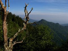 Dead Tree atop Appalachian Mountain.JPG Stock Photos