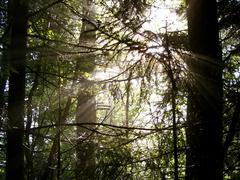 Sun's Rays through evergreen tree silhouettes.JPG Stock Photos