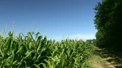 Country Lane & Corn Field Stock Footage