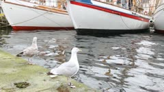 Two seagulls stand on pier near white sailing boats Stock Footage