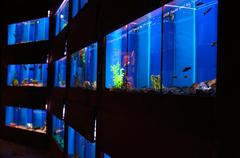 Stock Photo of Aquariums In A Pet Shop