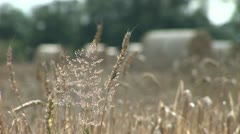 Wheat and bails in England Stock Footage